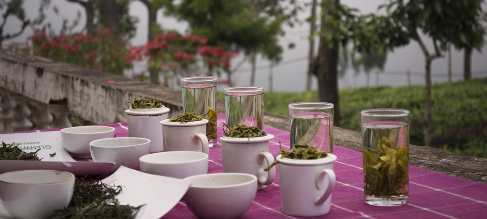 Tea tasting- is it for everyone?