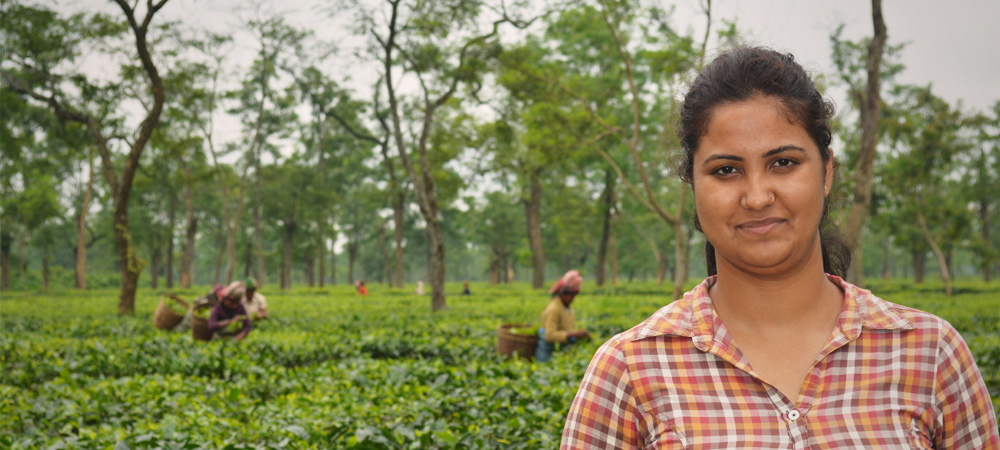 From Balijan (H) tea estate, a post on Manisha Singh, the field assistant.