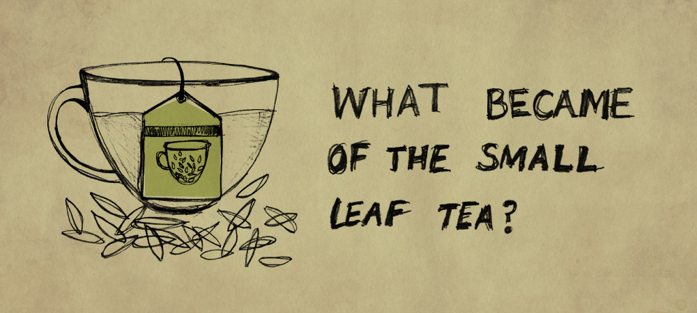 What became of the small leaf tea?