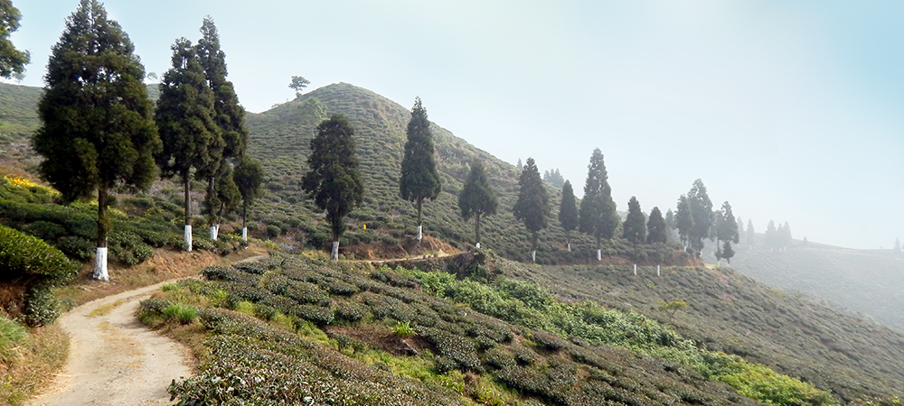 Margaret's Hope , Darjeeling