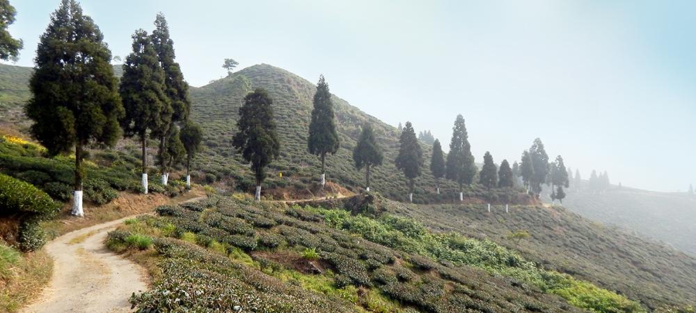 Margaret's Hope , Darjeeling
