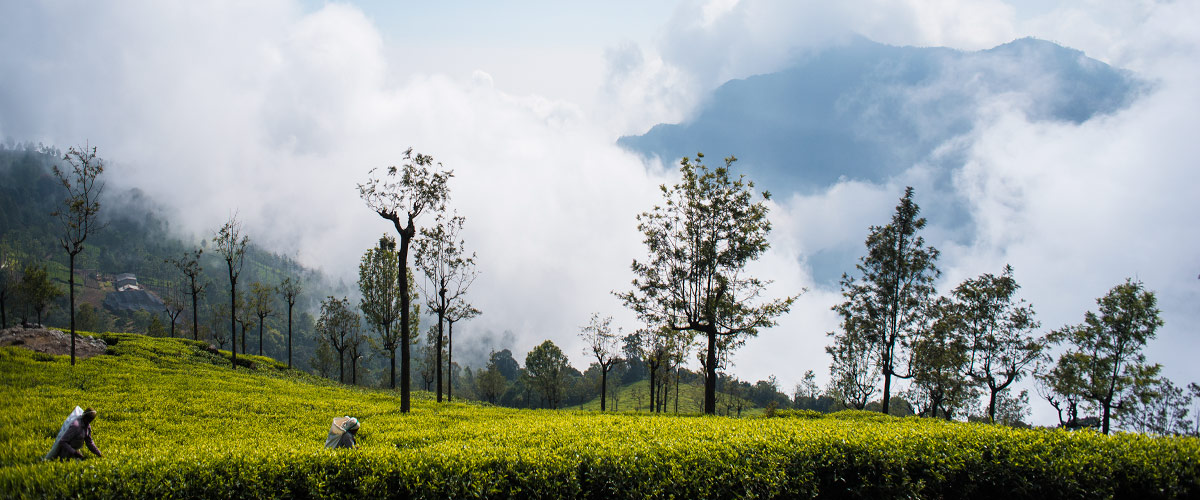 A view from Tantea