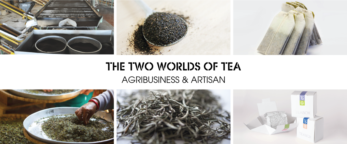 Tea Navigation Paths