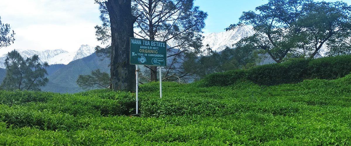 Banner_Kangra-state