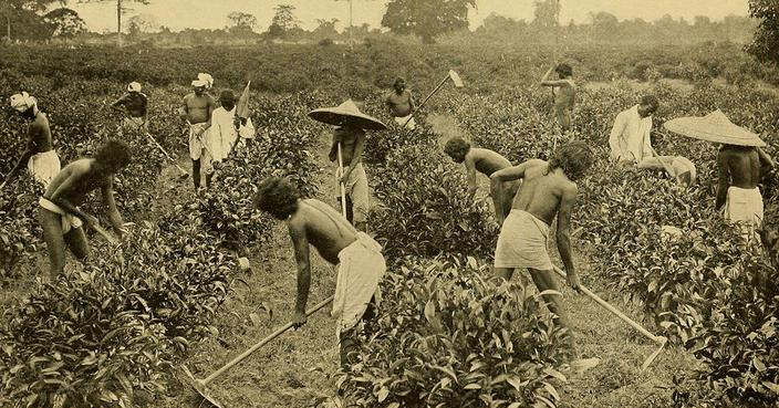 Tea workers in Assam, India (Image source: The Library of Congress)